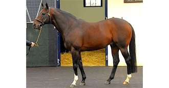 Image of stallion_HOLY ROMAN EMPEROR