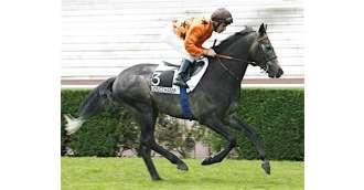 Image of stallion_POLARIX