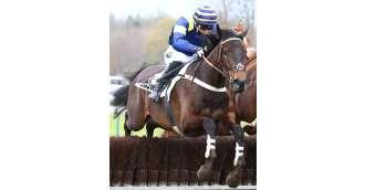 Image cheval à l'entrainement_MOULINS CLERMONT