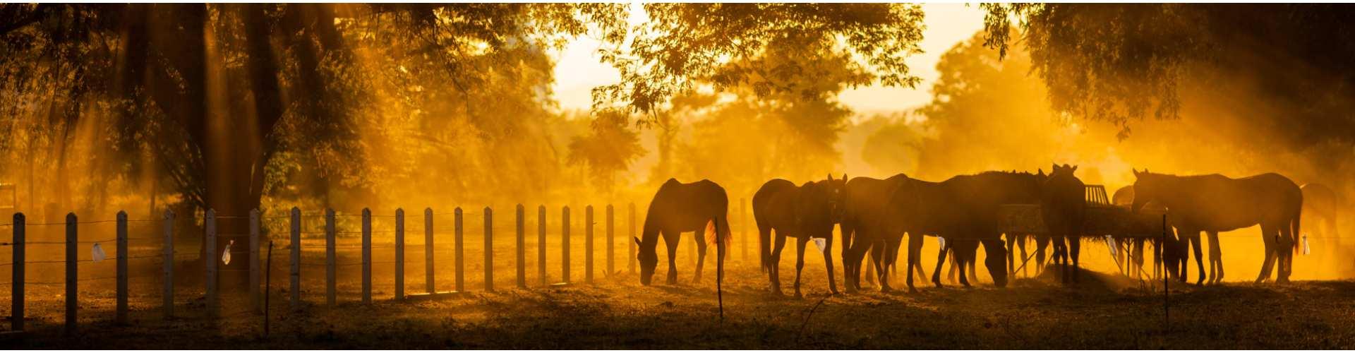 Equine online plarform