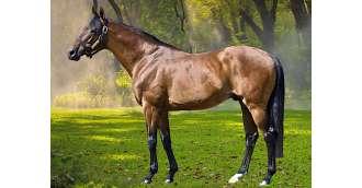 Image of stallion_WALDPARK
