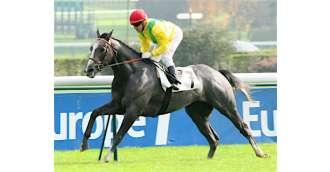 Image of stallion _ MORANDI